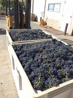 Rusty Grape Vineyard - Small User Photo